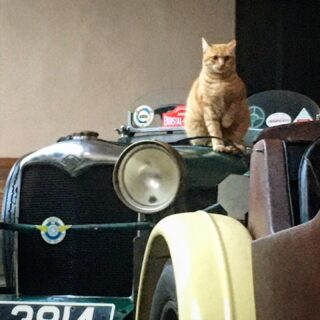 Gisella on Riley  #rileycars #britishcars #englishcars #catsoncars #relaxingmood #undertheportico #italianlifestyle #catsloversclub